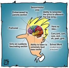 teen brain
